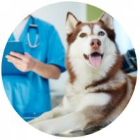 sluzby_interni_medicina
